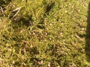 Katzenschreck Granulat ausstreuen vertreibt mit seinem Geruch Katzen aus dem Garten.
