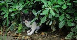 Katzenabwehr mit dieser Katzenschreck Pflanze