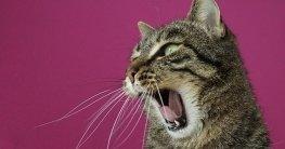 Mit diesem Katzenschreck Spray die Katze vertreiben