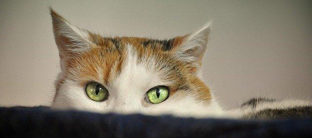 Katzenschreck mit Ultraschall vertreibt dauerhaft Katzen aus dem Garten