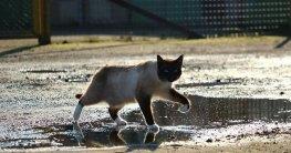 Nachbarskatze mit Katzenschreck Wasser erfolgreich vertreiben