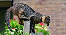 Katzenschreck online kaufen die Testsieger um Katzen aus dem Garten zu vertreiben