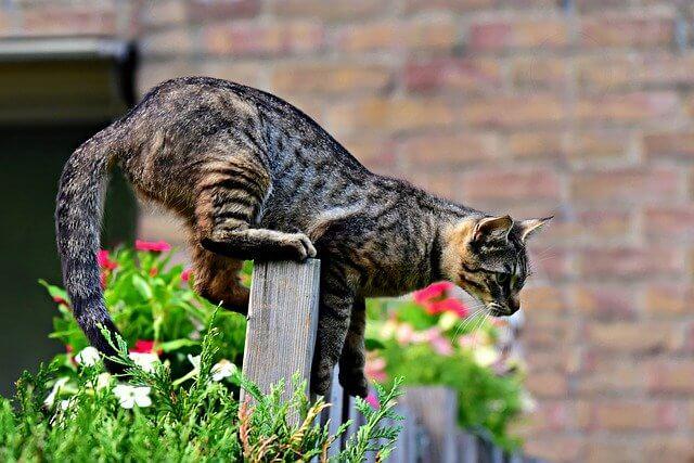 So gelingt es mit dem richtigen Katzenschreck.