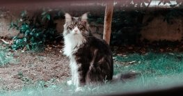 Katzenabwehrspray - Die Top 3 die wirklich helfen
