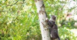 Katze kann durch diesen Katzenabwehrgürtel nicht mehr den Baum hoch klettern