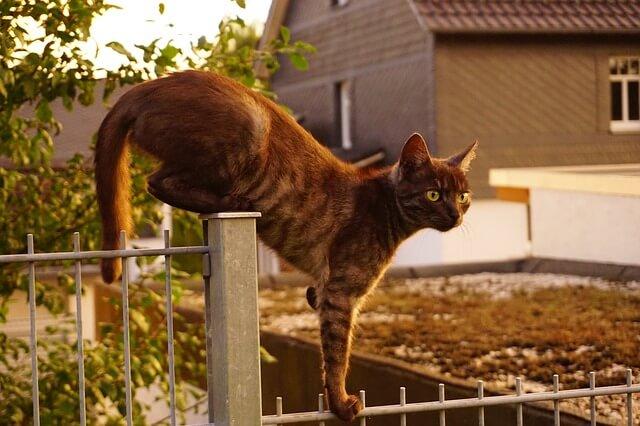 Katzenabwehr Spikes die an einem Gartenzaun befestigt werden um Katzen dauerhaft zu vertreiben.