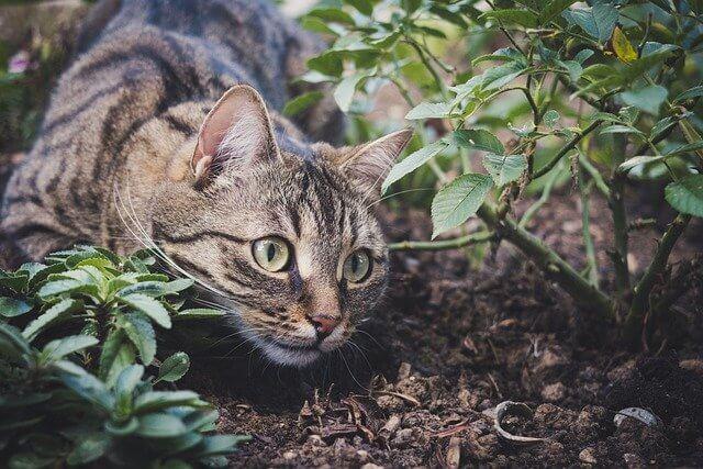Anleitung zum vertreiben von Katzen aus dem Garten