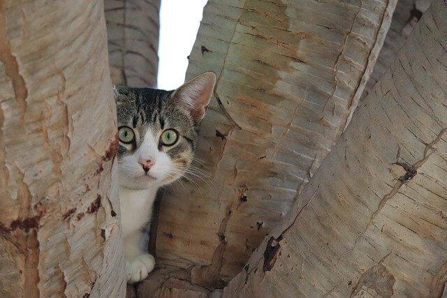 Katzenschreck online kaufen - Zuverlässige Geräte um Katzen aus dem Garten zu vertreiben